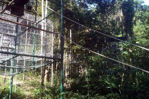 Gibbon-Rehabilitation-Project-Phuket-Thailand-05.jpg