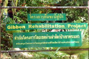Gibbon-Rehabilitation-Project-Phuket-Thailand-06.jpg