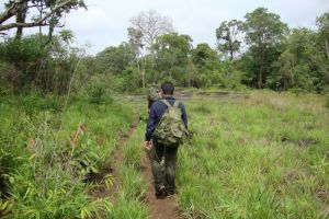 Green-Discovery-Laos-Tour-Jungle-Trekking.jpg