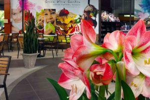 Green-View-Garden-Restaurant-Cameron-Highlands-Malaysia-001.jpg