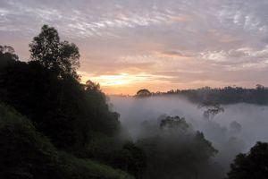 Hala-Bala-Wildlife-Reserve-Narathiwat-Thailand-001.jpg