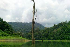Hala-Bala-Wildlife-Reserve-Narathiwat-Thailand-002.jpg