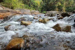 Hala-Bala-Wildlife-Reserve-Narathiwat-Thailand-006.jpg