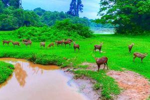Hlawga-National-Park-Yangon-Myanmar-001.jpg