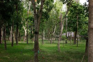Huay-Kaew-Arboretum-Chiang-Mai-Thailand-03.jpg