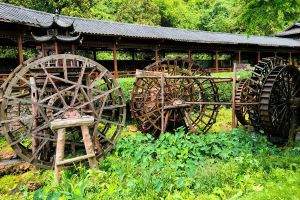 Huay-Kaew-Arboretum-Chiang-Mai-Thailand-04.jpg