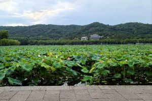 Huay-Kaew-Arboretum-Chiang-Mai-Thailand-05.jpg