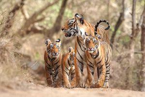 Hukawng-Valley-Tiger-Reserve-Kachin-State-Myanmar-001.jpg