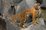 Hukawng-Valley-Tiger-Reserve-Kachin-State-Myanmar-002.jpg
