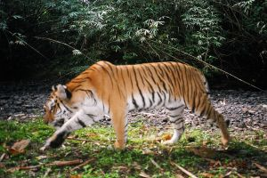 Hukawng-Valley-Tiger-Reserve-Kachin-State-Myanmar-004.jpg