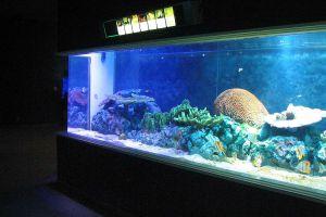 Institute-of-Marine-Science-Burapha-University-Chonburi-Thailand-03.jpg