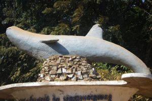 Irrawaddy-Dolphin-Kratie-Cambodia-004.jpg