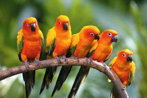 Jurong-Bird-Park-Singapore-002.jpg
