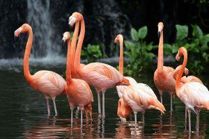 Jurong-Bird-Park-Singapore-003.jpg