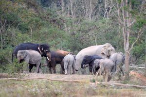 Kaeng-Krachan-National-Park-Phetchaburi-Thailand-004.jpg
