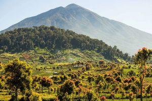 Kerinci-Seblat-National-Park-West-Sumatra-Indonesia-001.jpg