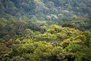 Kerinci-Seblat-National-Park-West-Sumatra-Indonesia-002.jpg
