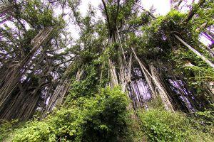 Kerinci-Seblat-National-Park-West-Sumatra-Indonesia-003.jpg