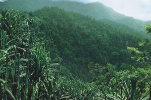 Kerinci-Seblat-National-Park-West-Sumatra-Indonesia-004.jpg