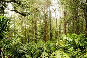 Kerinci-Seblat-National-Park-West-Sumatra-Indonesia-005.jpg