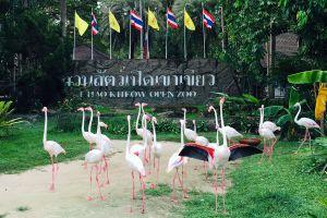Khao-Kheow-Open-Zoo-Chonburi-Thailand-03.jpg
