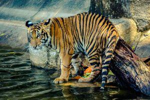 Khao-Kheow-Open-Zoo-Chonburi-Thailand-04.jpg