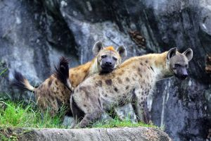 Khao-Kheow-Open-Zoo-Chonburi-Thailand-05.jpg