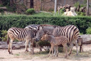 Khao-Kheow-Open-Zoo-Chonburi-Thailand-06.jpg