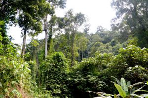 Khao-Lak-Lam-Ru-National-Park-Phang-Nga-Thailand-004.jpg