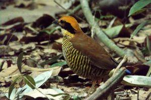 Khao-Pra-Bang-Khram-Wildlife-Sanctuary-Krabi-Thailand-02.jpg