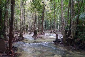 Khao-Pra-Bang-Khram-Wildlife-Sanctuary-Krabi-Thailand-04.jpg