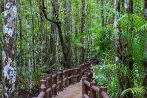 Khao-Pra-Bang-Khram-Wildlife-Sanctuary-Krabi-Thailand-05.jpg