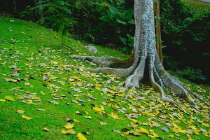 Khlong-Wang-Chao-National-Park-Kamphaengphet-Thailand-05.jpg