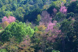 Khun-Sathan-National-Park-Nan-Thailand-02.jpg