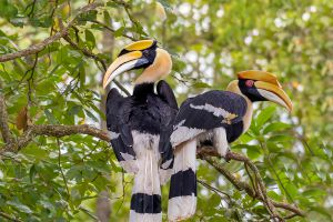 Klong-Nakha-Wildlife-Sanctuary-Ranong-Thailand-01.jpg