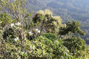 Klong-Nakha-Wildlife-Sanctuary-Ranong-Thailand-02.jpg