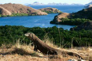 Komodo-National-Park-East-Nusa-Tenggara-Indonesia-001.jpg