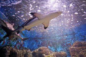 Kung-Krabaen-Bay-Aquarium-Chanthaburi-Thailand-03.jpg