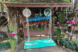 Lad-Tainod-Green-Market-Phatthalung-Thailand-01.jpg