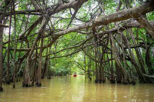 Little-Amazon-Takuapa-Phang-Nga-Thailand-03.jpg