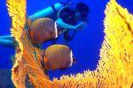 Local-Dive-Thailand-Phuket-001.jpg