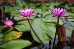 Lotus-Museum-Pathumthani-Thailand-02.jpg