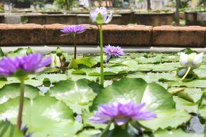 Lotus-Museum-Pathumthani-Thailand-04.jpg