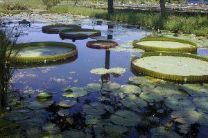 Lotus-Museum-Pathumthani-Thailand-05.jpg