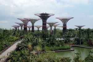 MacRitchie-Reservoir-Park-Singapore-002.jpg
