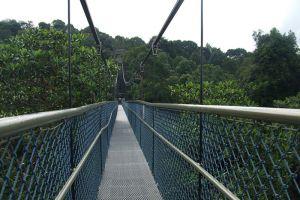 MacRitchie-Reservoir-Park-Singapore-003.jpg
