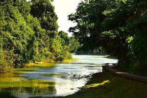 MacRitchie-Reservoir-Park-Singapore-004.jpg