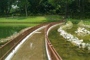 MacRitchie-Reservoir-Park-Singapore-006.jpg