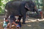Maetaeng-Elephant-Park-Chiang-Mai-Thailand-001.jpg