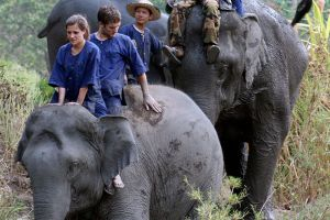 Maetaeng-Elephant-Park-Chiang-Mai-Thailand-003.jpg